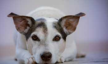 Comment se préparer à l'arrivée d'un chien ?