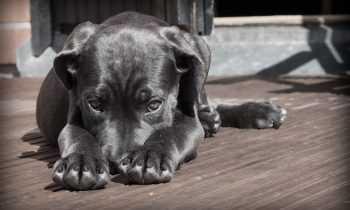 Quel est le budget annuel pour un chien ?