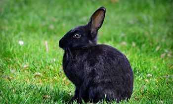 Comment protéger la cage de son lapin en hiver ?